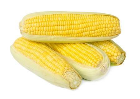 fresh corn isolated on a white background.