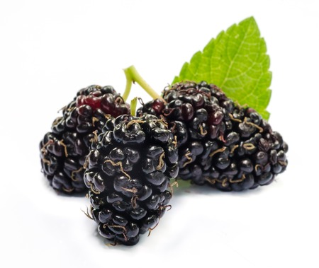 Group of mulberries with a leaves Isolated on a white background. photo