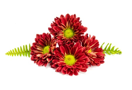beautiful red  flower on a  white background. Stock Photo - 23031847