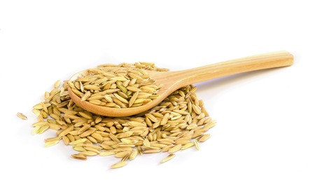 paddy rice seed  and wooden spoon on white background. photo