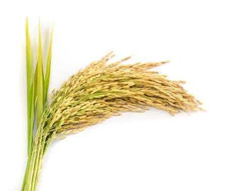 arroz blanco: semillas de arroz con c�scara en un fondo blanco Foto de archivo
