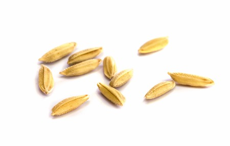 paddy rice seed  on a  white background.