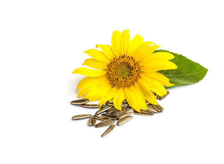 black seeds: sunflower with seed  isolated on white background. Stock Photo