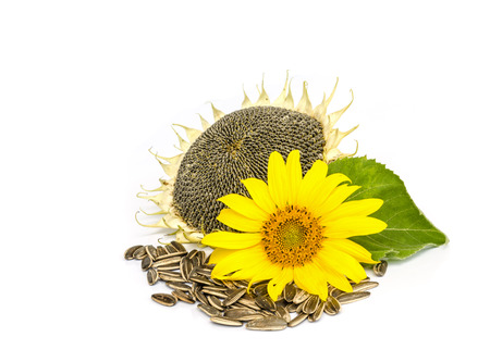 sunflower with seed  isolated on white background. Stock Photo
