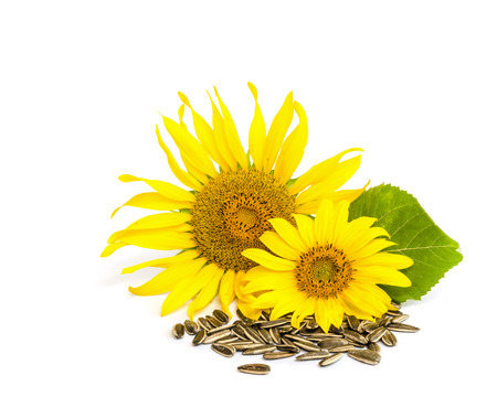 sunflower with seed  isolated on white background. Banque d'images