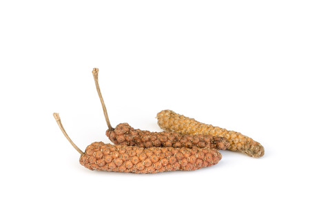 piper: Long pepper or Piper longum  for a cooking  on white background.