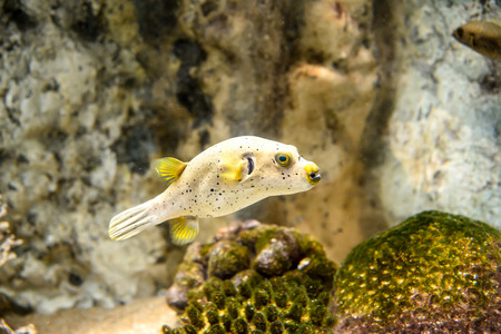 fishtank: colorful fish and coral  swimming around in a fishtank .