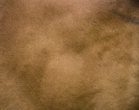 cow skin: close-up of brown cow skin texture background. Stock Photo