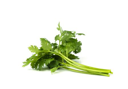 close-up of coriander leaves isolated on  white background. Stock Photo