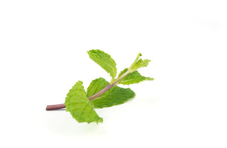 Fresh  peppermint leaves isolated on white background.