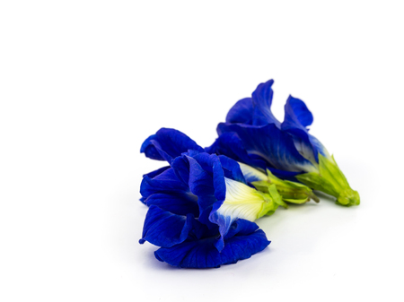 Close up of Butterfly pea flower on white background. Reklamní fotografie