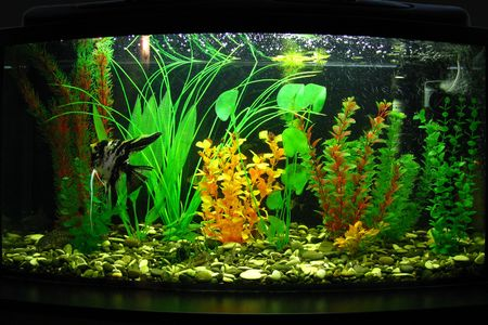 Fragment of aquarium full of water plants Stock Photo