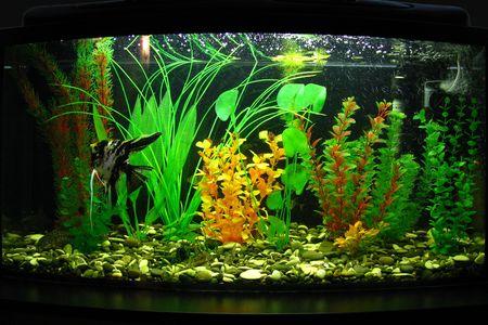 Fragment of aquarium full of water plants Stock Photo