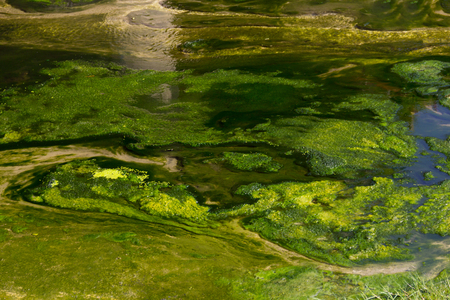 polluted river: Polluted river with green water plants in it