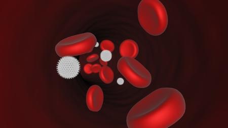 circulating: Blood Stream - Opened Artery - Human anatomy