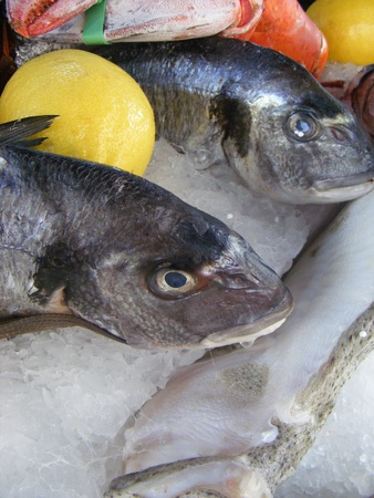 Fresh raw fish presented for sale in market  photo