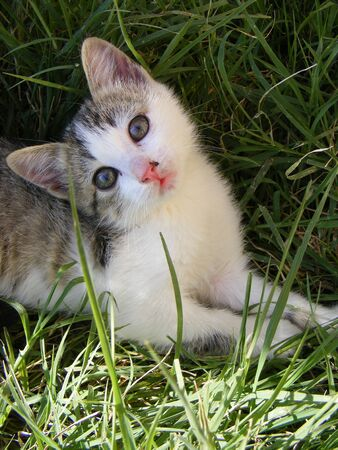 cat purrs in the meadow photo