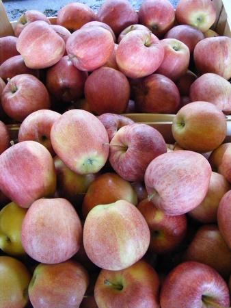 Apples for sale Piedmont gray market photo