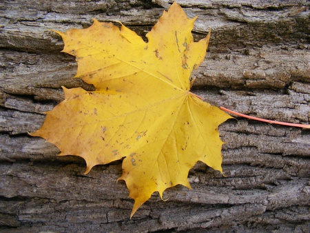 leaf on tree trunk in autumn photo