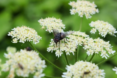 insects on flower blooming period photo