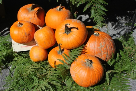 A background of pumpkins, sqaushes and gourds for sale at a market photo