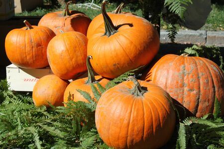 pumpkin patch: A background of pumpkins, sqaushes and gourds for sale at a market Stock Photo