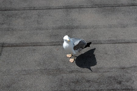 bird 's eye view: bird seagull on the roofs of houses