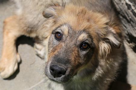 Puppy dog mongrel photo