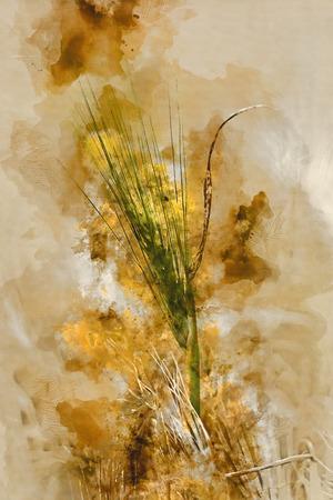 Getreide heeft een aquareloptiek Stockfoto