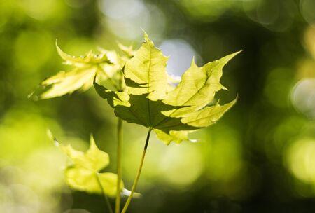 Bladeren in zonlicht