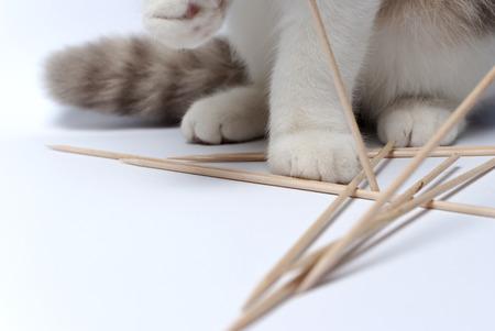 Kat spelen met tandenstokers Stockfoto