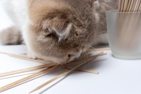 Cat snuift tandenstokers