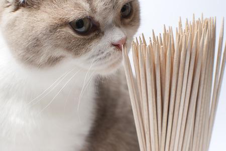Kat snuift tandenstokers Stockfoto