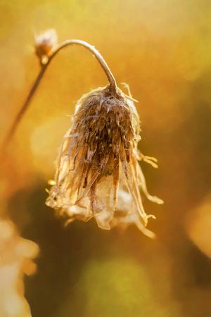 Veld planten in zonlicht artistieke