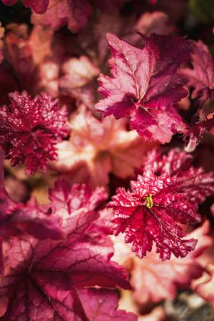 Heldere rode bladeren