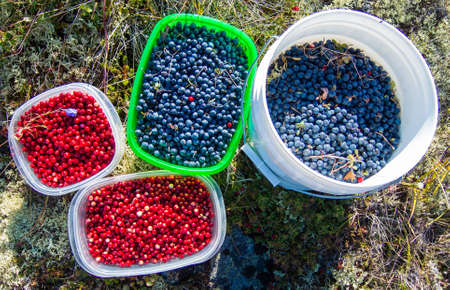 Four containers of wild blueberries and low-bush cranberries lingonberries from the Alaskan tundra