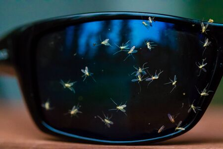 Tiny midges Chironomidae splattered on a pair of sunglasses during a high-speed boat ride over a buggy river.