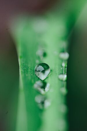 morning nature background with beautiful drop. ecological slow life. macro