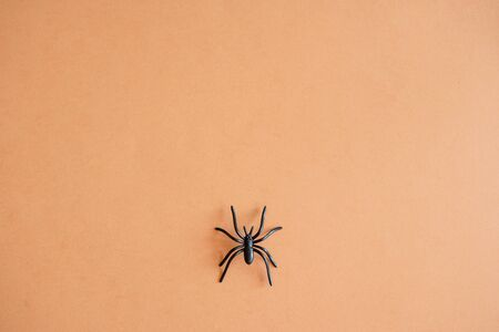 Halloween background decoration holiday concept. Minimal flat lay view of black spide