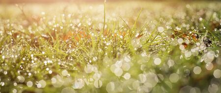 Ecology blurred background of green grass and rain drops f water
