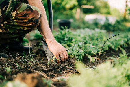 Close up of muddy radish in hands. Home backyard gardening. Lifestyle