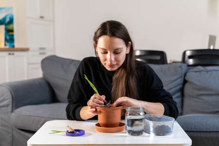Young millennial woman planting onion herbs at home in a pot. Home gardening hobby. Zero waste sustainable lifestyle. Healthy clean food Banco de Imagens