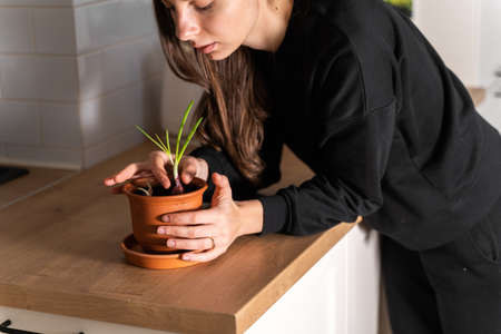 Millennial girl planting home garden in flat. Pot with onion and garlic herbs. Sustainable lifestyle. Zero waste. Clear non toxic food Banco de Imagens