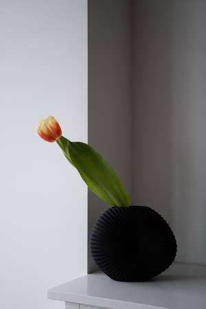 One tulip in black vase on white shelf in room. Minimal concept of cozy home. Japandi style. Simple home decor