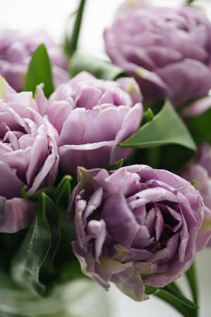 Close up purple tulips photo. Spring concept. natural girly background. flowers design. Slow living mindful life