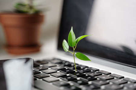 Laptop keyboard with plant growing on it. Green IT computing concept. Carbon efficient technology. Digital sustainability Banco de Imagens - 167429779