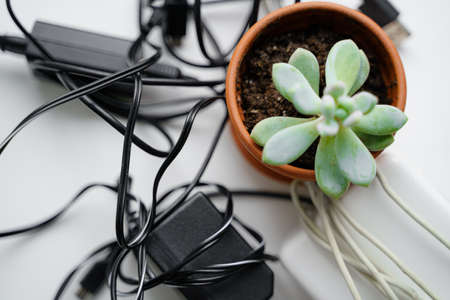 E waste, old cables and green plant. Gadget recycle of tech junk. Environment pollution Banco de Imagens