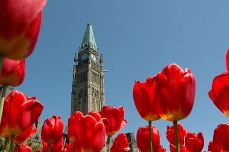 Tulip Festival in Ottawa with the Peace Tower  photo
