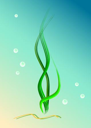 seaweeds: Seaweeds, bubbles, sea floor. Vector illustration