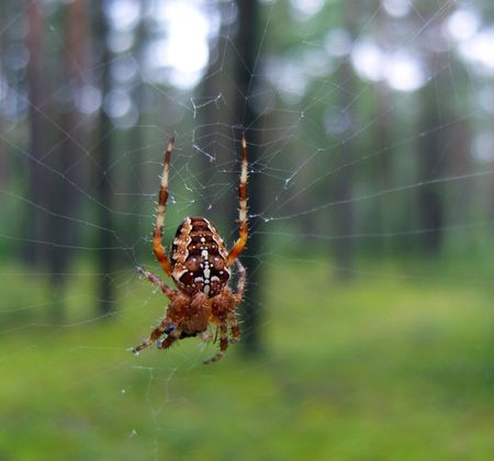 A beautiful spider in a forest. Stock Photo - 5385699